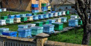 Stupina Grecu-Miere de salcam, miere de rapita, miere de floarea soarelui